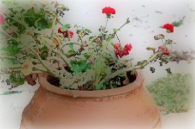 the geranium theodore roethke