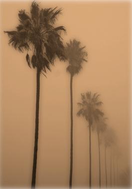 Los Angeles Notebook, essay by Joan Didion