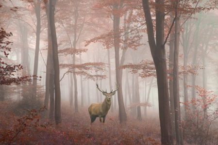 deer honorable and bold
