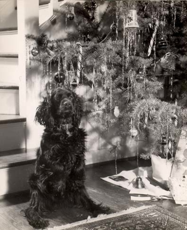 Christmas Dog, poem by Shel Silverstein