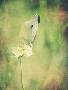 angela_doelling