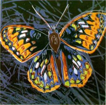 butterfly.jpg!Blog