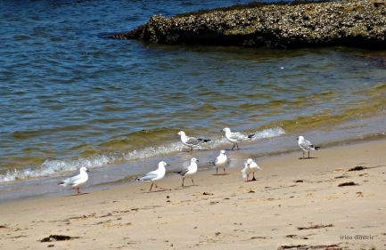 Balmoral Beach 1mb