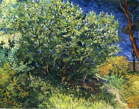 lilac-bush-1889.jpg!Large