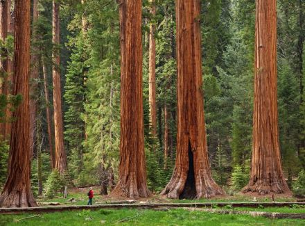 sequoia-national-park-big-trees-trail_51525_600x450-1