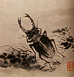 studies-of-insects-beetles-1707