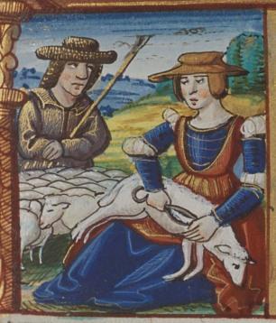 woman shearing a sheep
