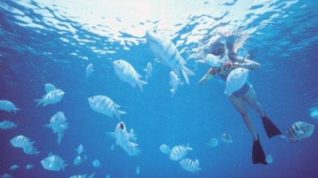 Woman Photographing Fish Underwater