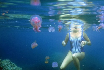 summerskin_princ_rm_photo_of_jellyfish_and_swimmer_s1