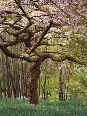magnolia wales