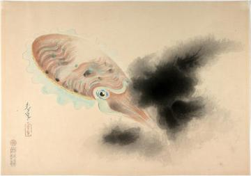 bakufu_ohno-familiar_fishes_of_nippon-squid-00036192-040510-f12
