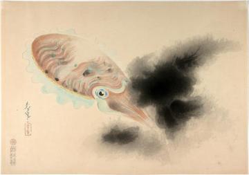 bakufu_ohno-familiar_fishes_of_nippon-squid-00036192-040510-f12