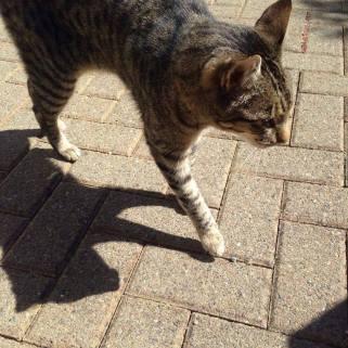 Feeney_lost_cat