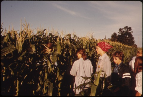 TEENAGERS_BEGINNING_THEIR_SUMMER_DAY_DETASSELING_CORN_IN_FIELDS_NEAR_NEW_ULM,_MINNESOTA._THE_HYBRID_CORN_SEED_FOR_THE..._-_NARA_-_558242
