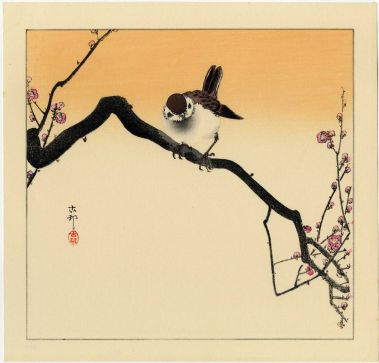 koson sparrow 4