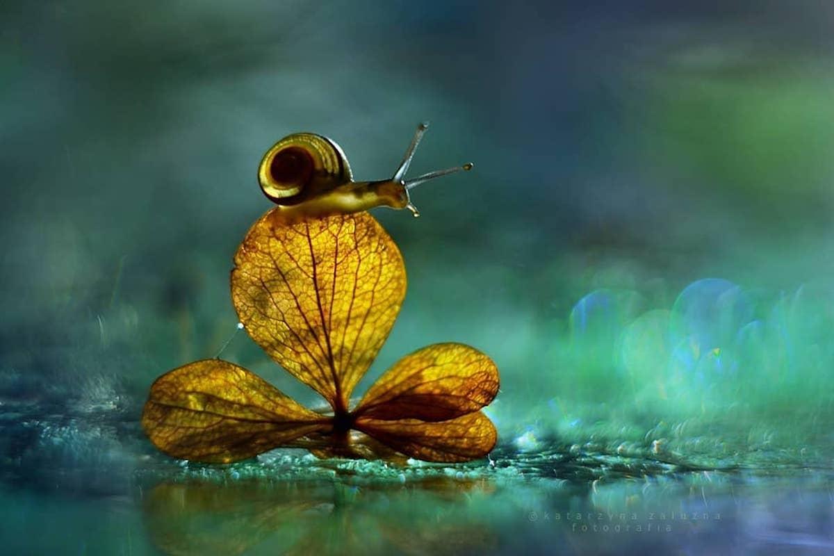 bokeh-snail-photography-1
