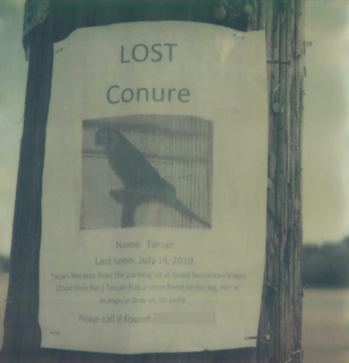 lost parrot nancy l. stockdale