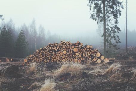 wood-336547_1920